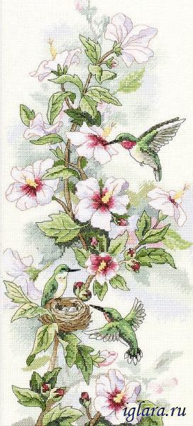 Клематис и колибри