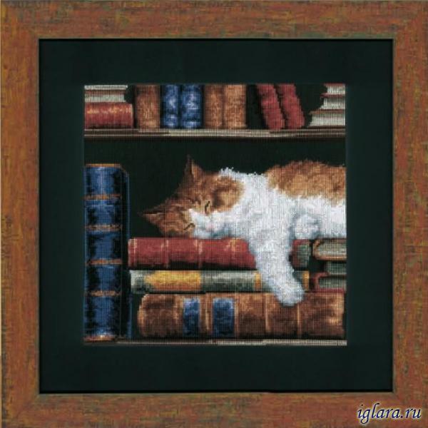 Кошка, спящая на книжной полке