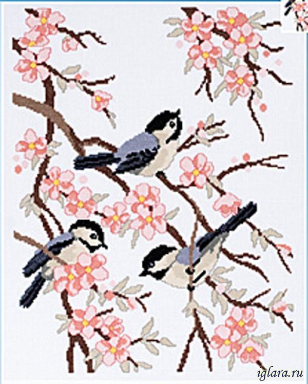 Синицы и цветки яблони