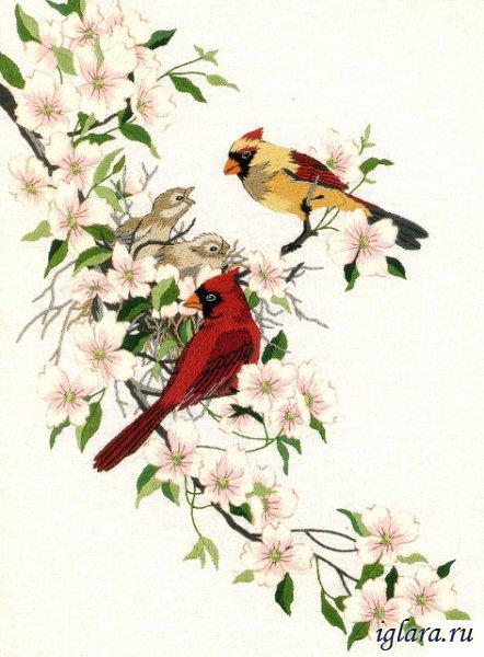01516/��������� � ����� (Cardinals in Dogwood)