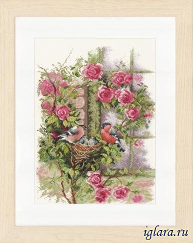PN-008020/Гнездо в розах (Nesting birds in rambler rose)